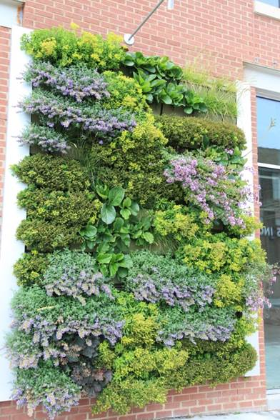 A green wall with facing material on both sides to conceal the side-feed irrigation.
