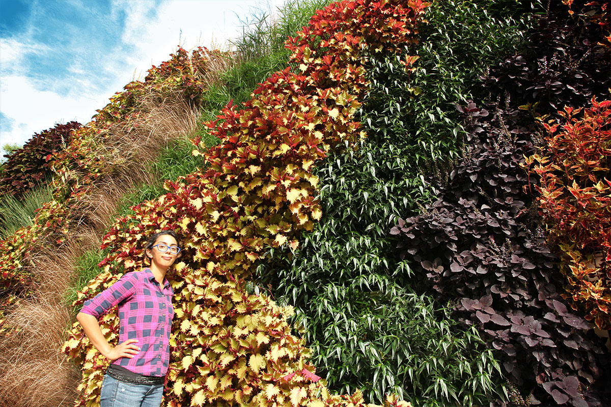 Colorful creen wall with annuals