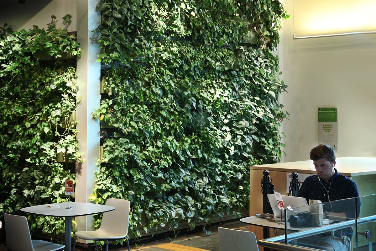 Indoor living wall in an office building planted with pothos.