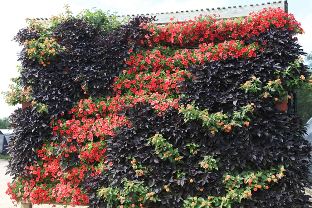 Green walls populated with annuals are cost effective and easy to reinvent each year.