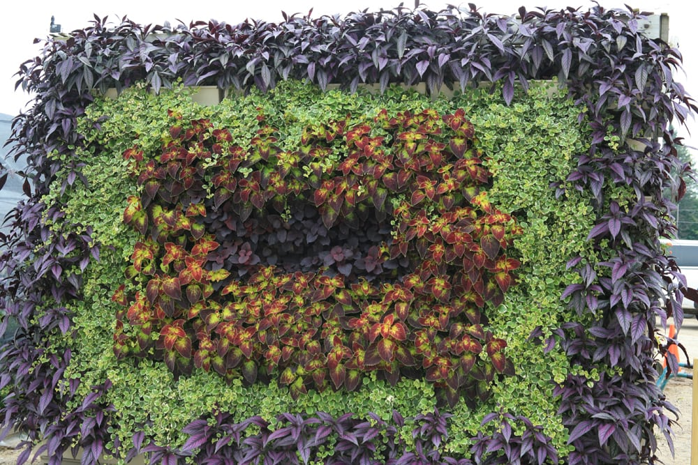 Fun, Geometric Living Wall Design
