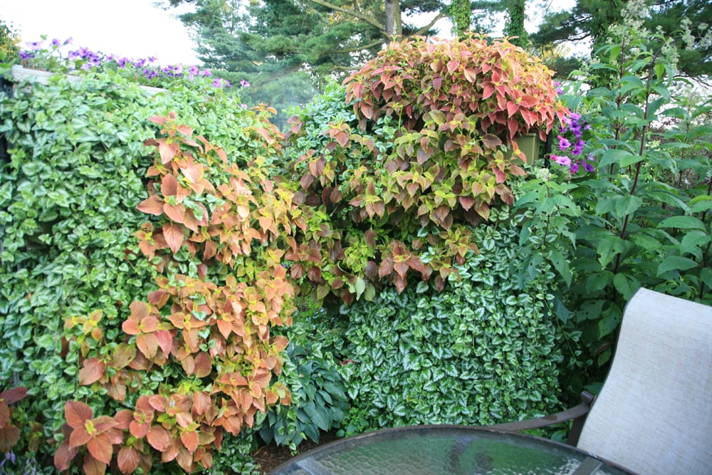 Living walls on fences create calming respites for privacy and relaxation.