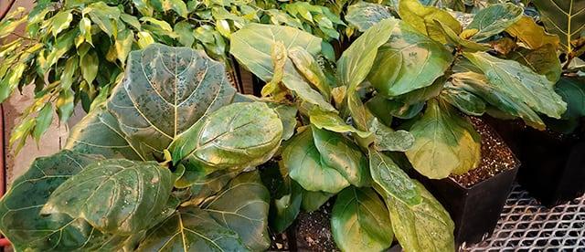 Healthy Green Wall Plants