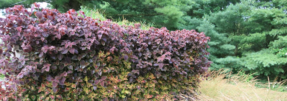 Plant mix for living wall
