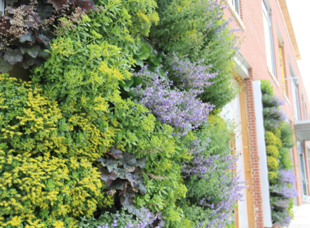 Livewall living wall system livescreen green wall on for Green wall advantages
