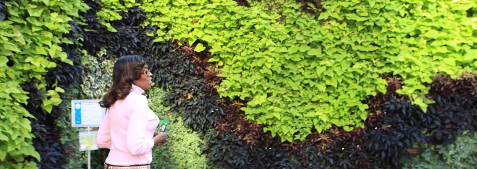 Living Wall Plants - Annuals