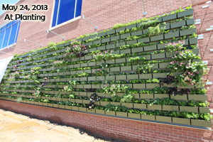 A recently-planted LiveWall system installed on the side of a red brick building.