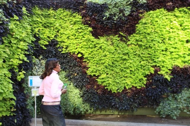 Section of Back to Eden, a green wall art competition entry planted in 2013.
