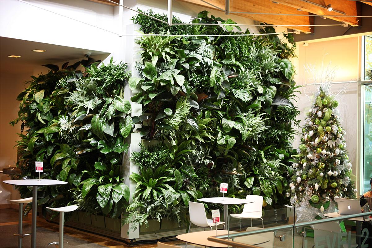 Green walls help boost mental health.