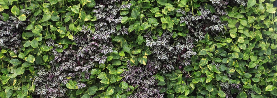 livewall green wall system living wall product and