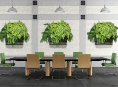 Office Space living wall