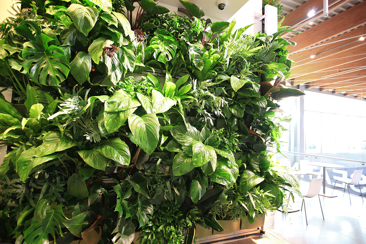 Indoor green walls improve air quality.