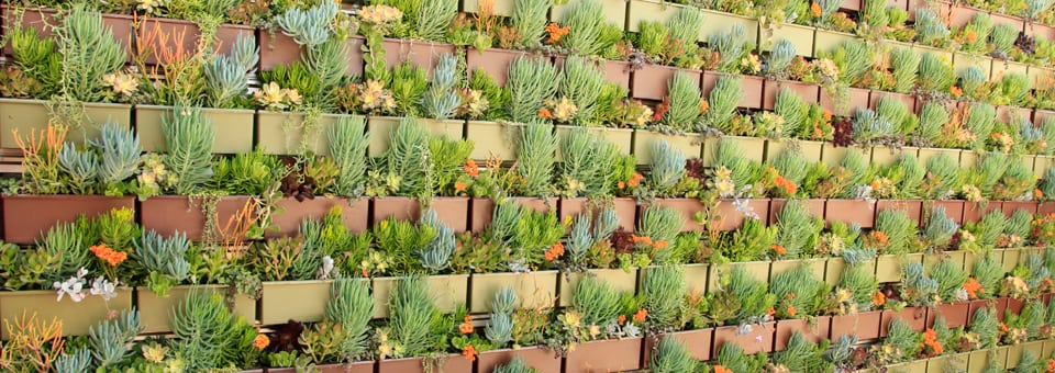 Livewall green wall system living wall plant selection for Living plant walls