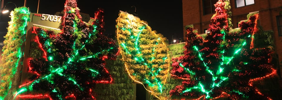 living wall and LED lights