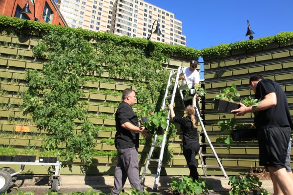 Gilmore Group chefs help to plant the living wall system at the B.O.B.