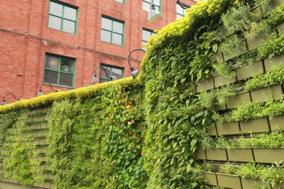 Herbs growing from a vertical LiveWall at The BOB in Grand Rapids, MI.