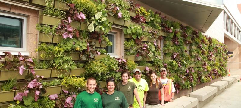 green wall installation crew