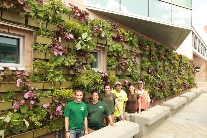 green wall installation crew