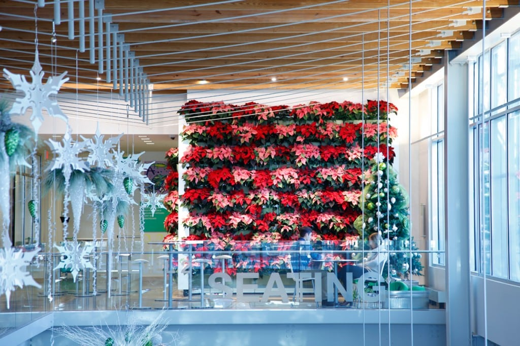 poinsettia indoor green wall