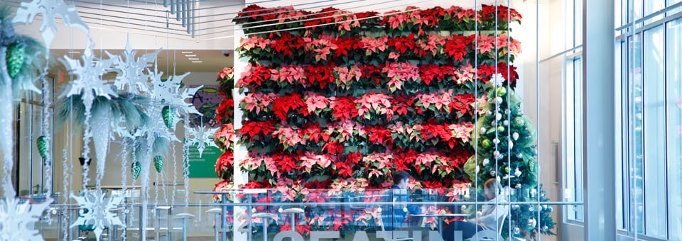 Vertical Garden of Poinsettias on Holiday Display at the Grand Rapids Downtown Market