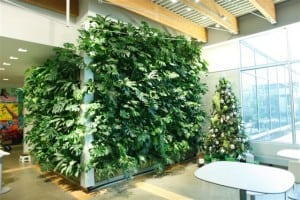 indoor-green-wall-plants