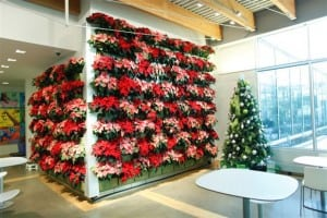 indoor-planted-wall-poinsettia