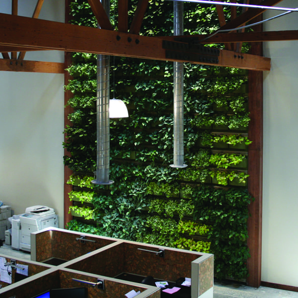 Westland Real Estate brightens the office with a green wall.