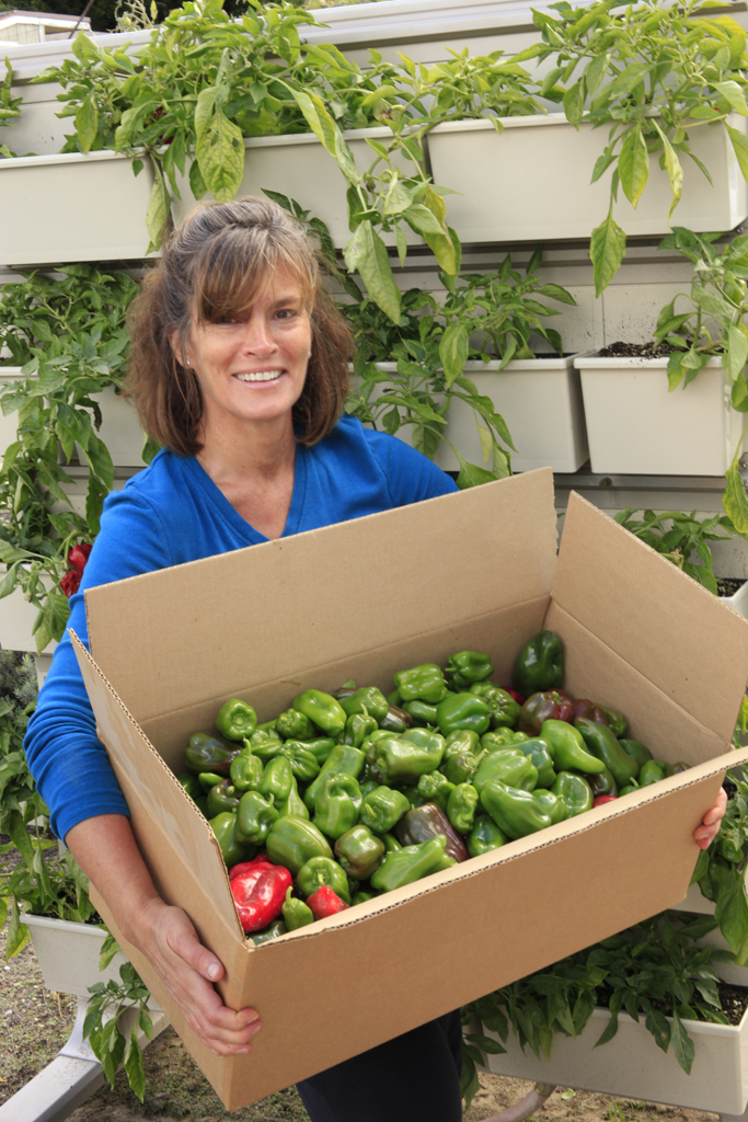 Woman with a box of peppers picked from a green wall.