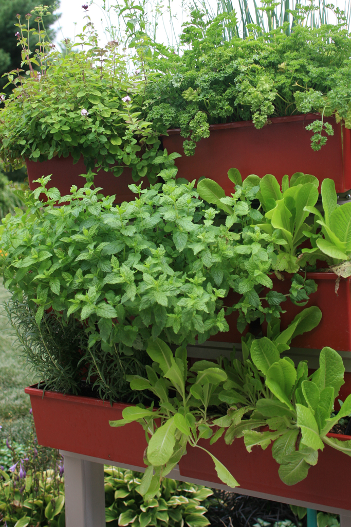 LiveScreen system with shade-tolerant herbs.