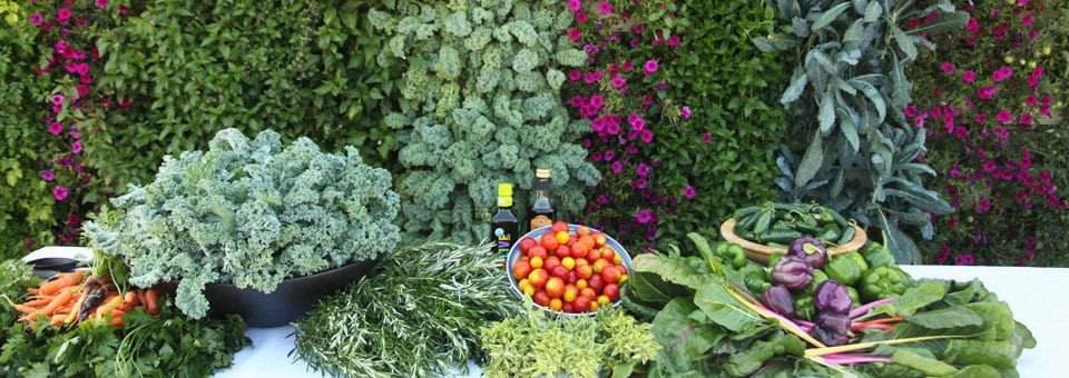 A bountiful harvest of greens, herbs and vegetables grown in the LiveWall vertical garden system.
