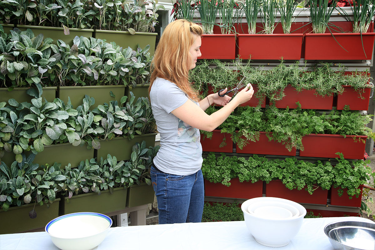Grow fresh herbs in LiveWall green wall