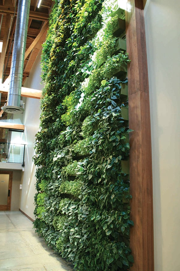 Willow-Street-Indoor-Living-Wall