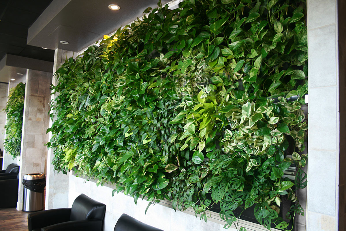 livewall green wall system livewall green wall enlivens a peet s coffee tea store at an. Black Bedroom Furniture Sets. Home Design Ideas