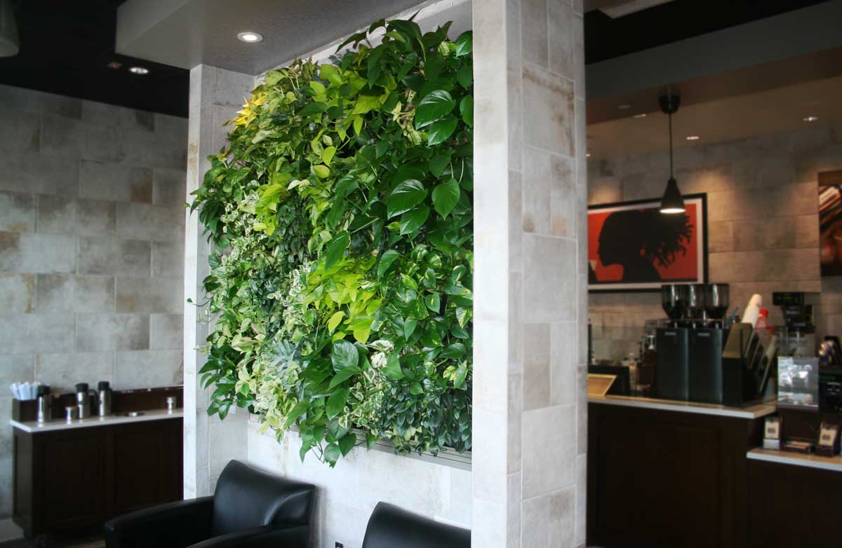 LiveWall  Green Wall Enlivens a Peet s Coffee   Tea Store at an Upscale  Mall in San Diego. LiveWall  Green Wall Enlivens a Peet s Coffee   Tea Store at an
