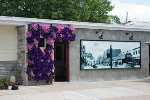 Wasserman's Flowers & Gifts - Living Wall