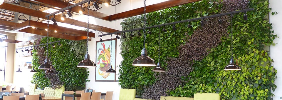 Brome Burger has 2 indoor green walls that liven up the restaurant.