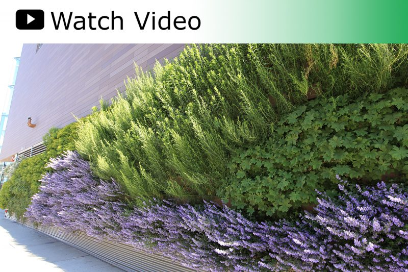 A video featuring the 4700+ square foot LiveWall at the Lakeview Whole Foods Market in Chicago.