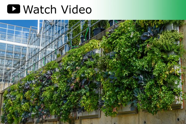 A video featuring the vertical LiveWall gardens at Phipps Conservatory.