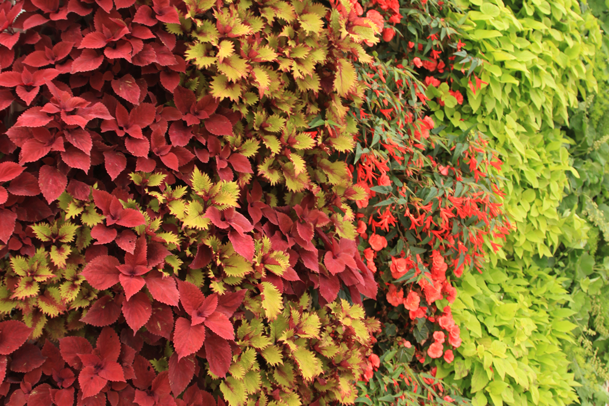 Annuals and Perennials combined in a green wall planting.