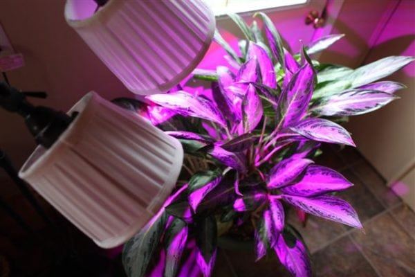 Other LED grow light bulbs commonly use a combination of blue and red diodes which emit a purplish-pink color. This changes the appearance of plant leaves and flowers and feels unpleasant to the human eye.