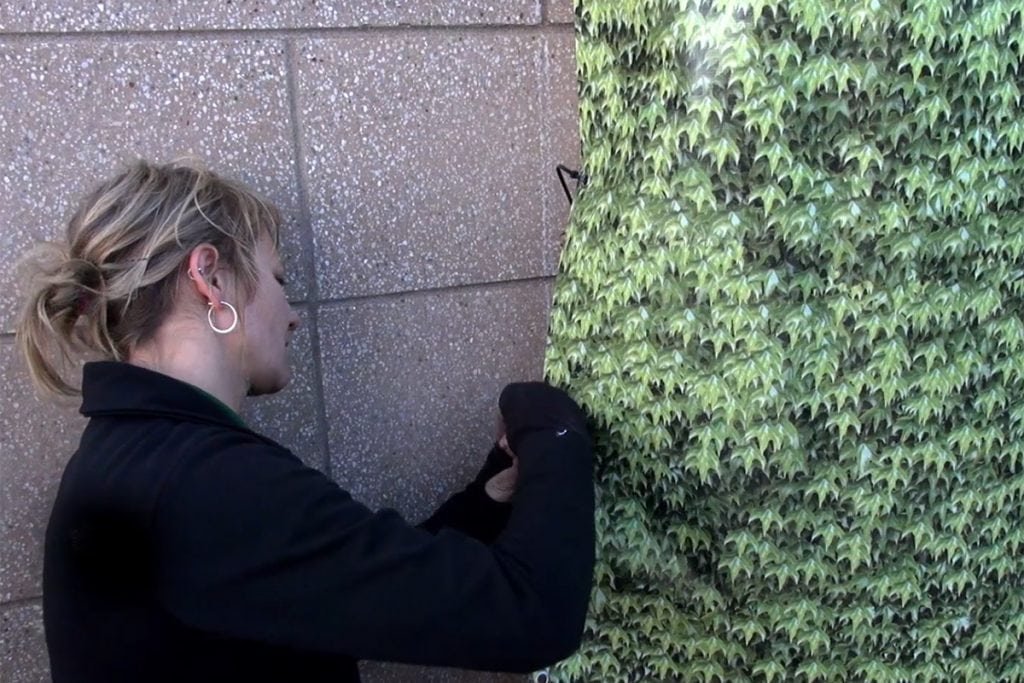 Woman securing the sides of a living wall winter cover with zip ties.