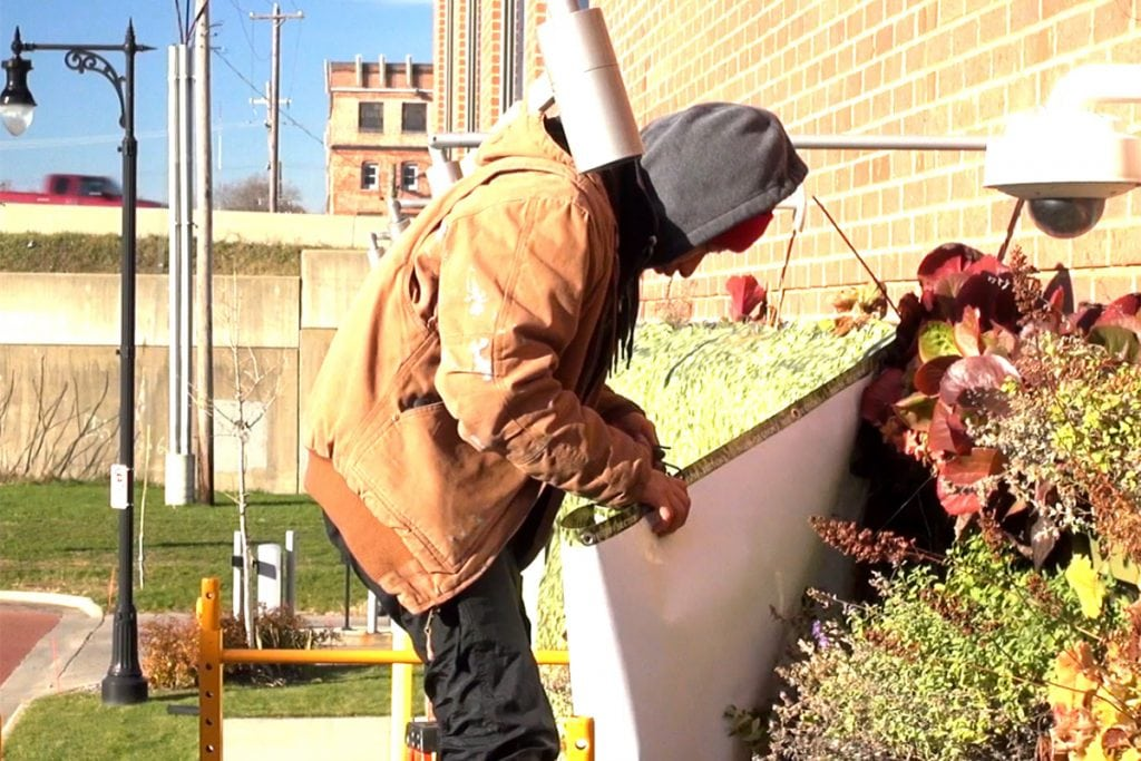 Man installing a winter cover over a perennial living wall.