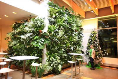 This living wall installation is lit by 12 Norb® bulbs (6 with 30 degree beam angle and 6 with 15 degree beam angle) directed at the 8' x 8' and 11' x 11' walls. These bulbs are angled from track lighting attached to the 12 foot ceiling.