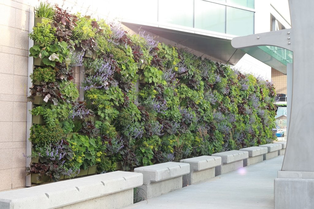 A complete, planted, and rear-irrigated LiveWall system behind a white, stone sidewalk and benches.
