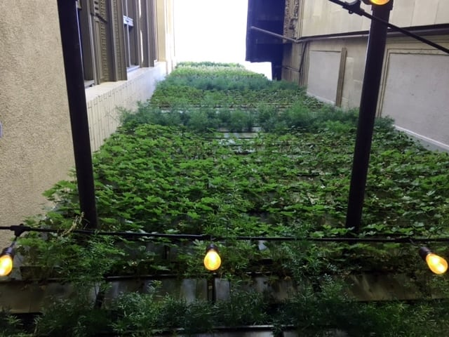 The height of the living wall effects irrigation.
