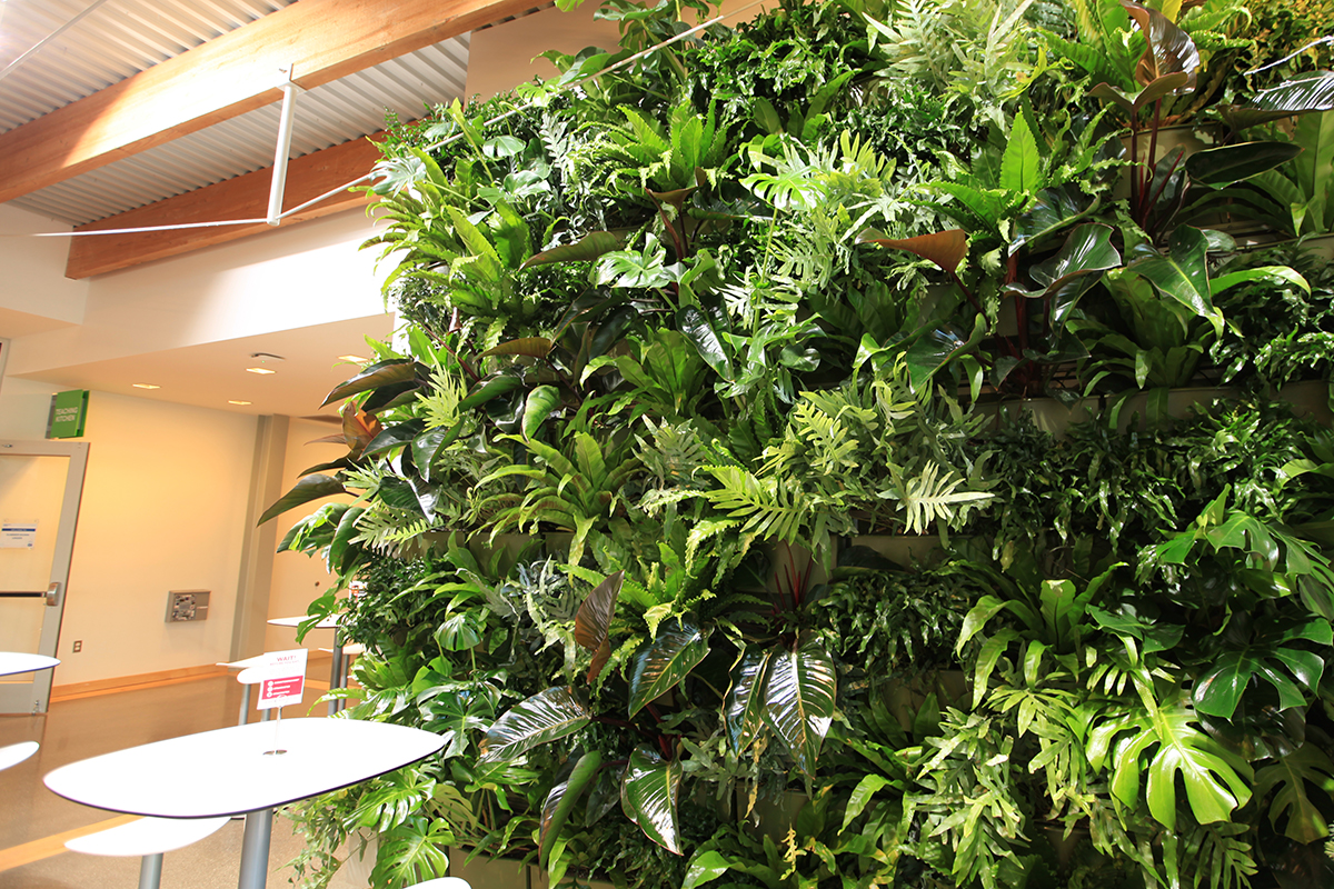 Grand Rapids Downtown Market features Billowing Tropical Plants paired for similar growth habit, light and water needs.