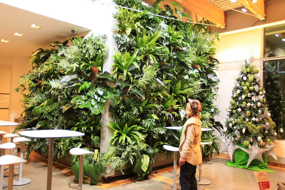 Night time lighting of indoor vertical garden with billowing tropicals, during the holiday season (next to Christmas tree).
