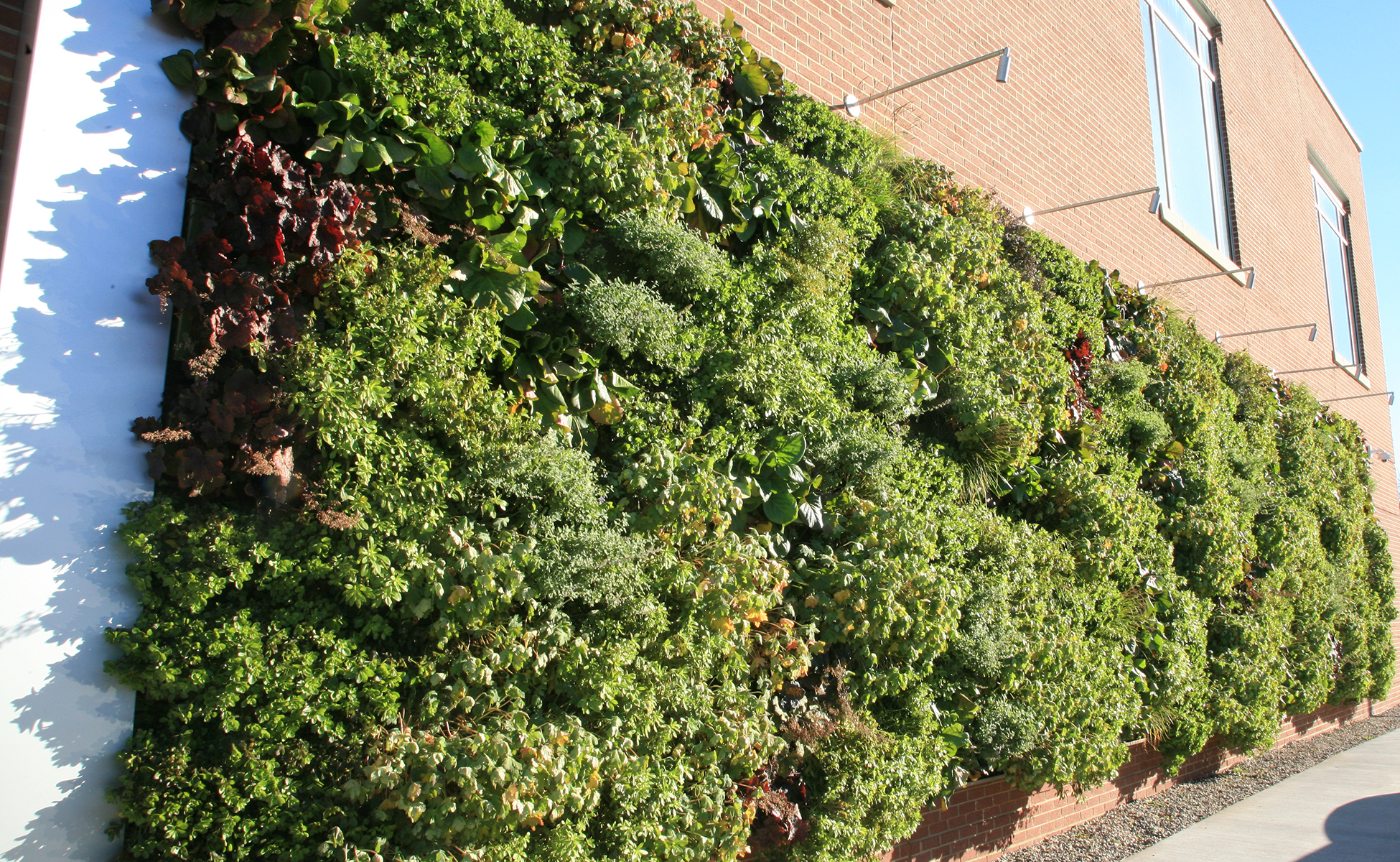 Green wall planted with cold-winter hardy perennials, photographed in November