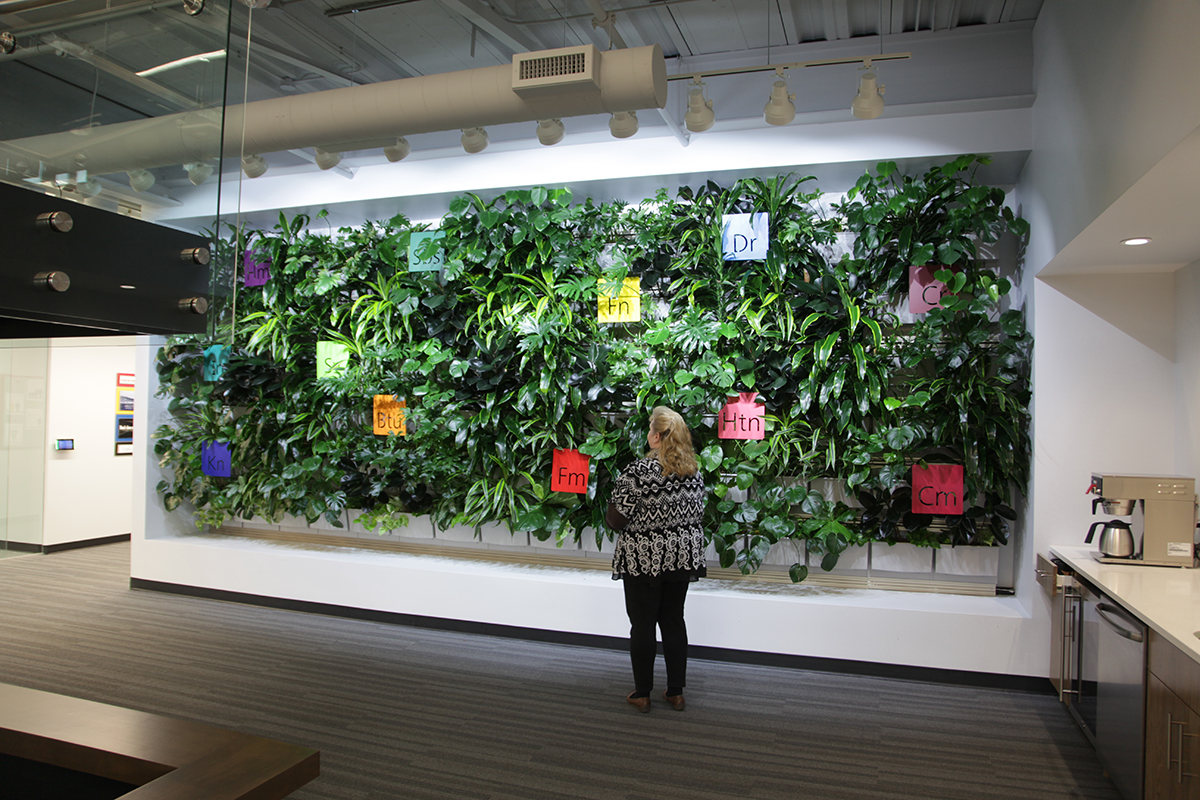 Applied Imaging corporation's living wall, a year after initial planting.