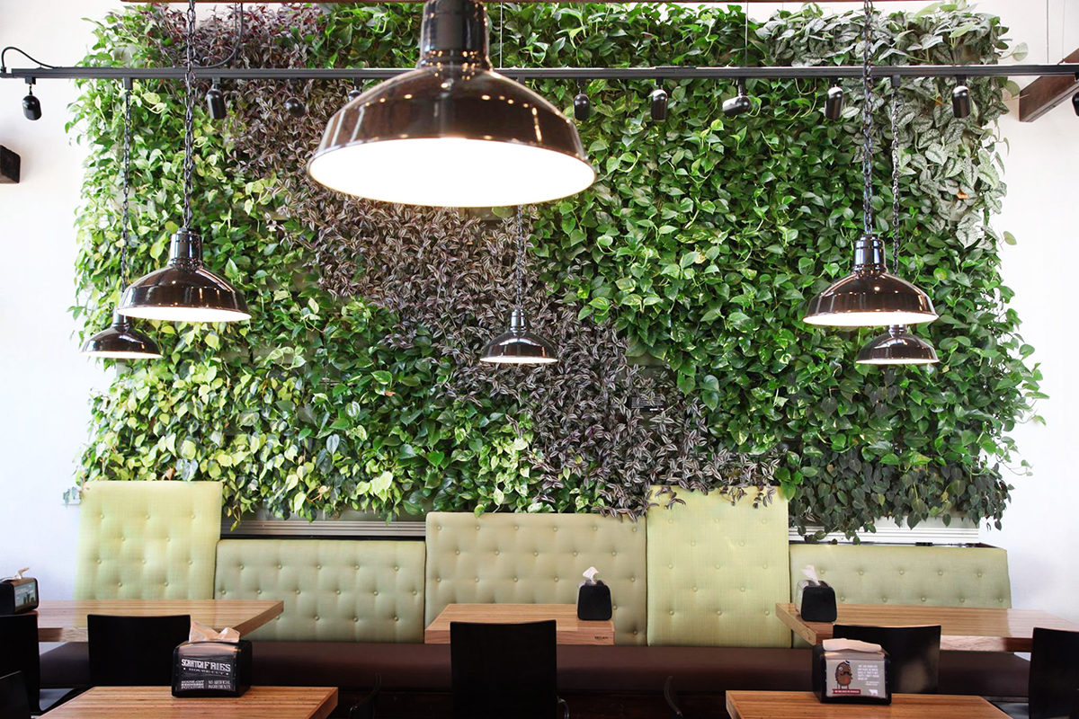 Indoor living wall planted with tradescantia and pothos cultivars.